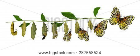 Life Cycle Of Butterfly From Larva To Adult Insect. Flying Creature. Entomology Theme. Flat Vector D