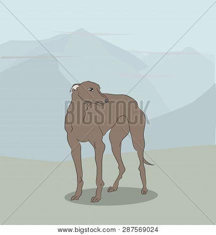Vector Illustration Dog Standing On Nature, Color, Vector, Outdoors