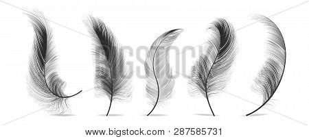 Black Feathers Set Vector. Feather Bird, Soft Plume Design. Isolated Illustration