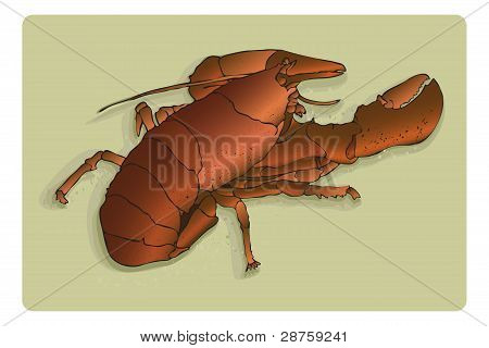 Lobster Illustration