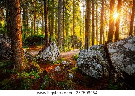 Enchanted woods in the morning sunlight. Fairytale forest in autumn. Location place Germany Alps, Europe. Wonderful natural background. Scenic image of wilderness. Discover the beauty of earth.