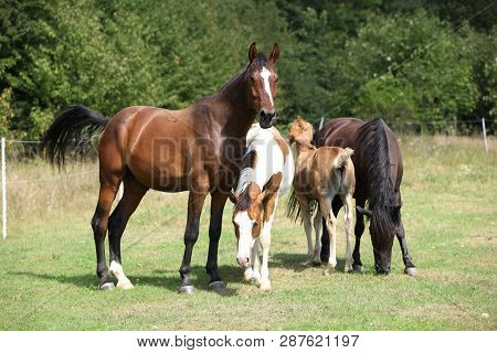 Batch Of Horses On Pasturage, Together