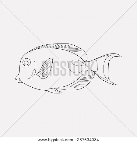 Marine Brush Fish Icon Line Element. Vector Illustration Of Marine Brush Fish Icon Line Isolated On