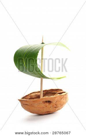 Sailboat Made Of Walnut
