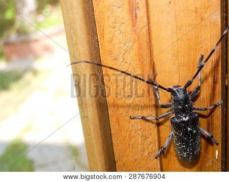 A Bark Beetle Barbel Bark Beetle Subfamily Scolytinae.