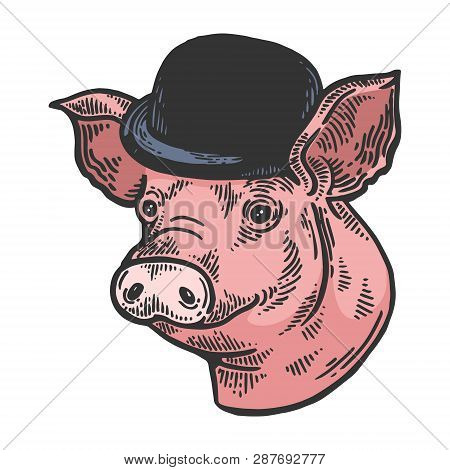 Pig Animal In Bowler Hat Sketch Color Engraving Vector Illustration. Scratch Board Style Imitation.