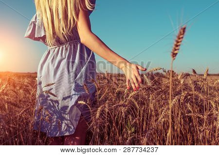 A Girl In A Dress, Stands In The Summer In A Wheat Field, Walks In Nature, Hand Touches Spikelets Of