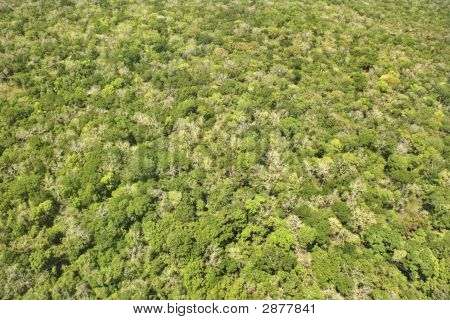 Floresta densa.