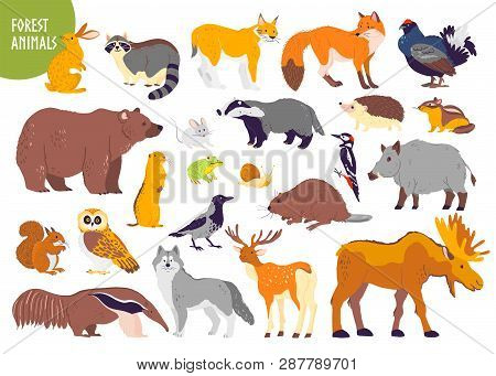 Vector Collection Of Forest Animals And Birds: Bear, Fox, Hare, Owl Isolated On White Background. Fl