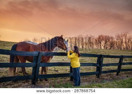 Young woman is petting horses on a farm in Kentucky at sunset