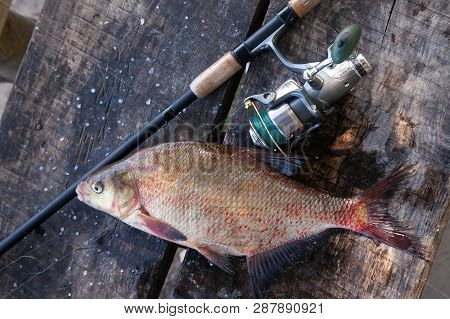 Big Freshwater Common Bream And Fishing Rod With Reel On Vintage Wooden Background..