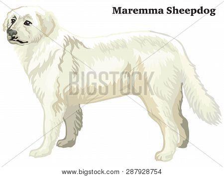 Decorative Outline Portrait Of Standing In Profile Dog Maremma Sheepdog, Vector Colorful Illustratio