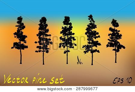 Pacific northwest pine old growth evergreen tree silhouette set collection poster