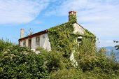 Almost completely overgrown abandoned family house covered with crawler plants and trees on cloudy blue sky background poster