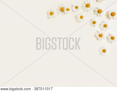 Flowers Composition. Flower Frame Or Border Of Camomiles On A Ivory Background. Top View, Copy Space