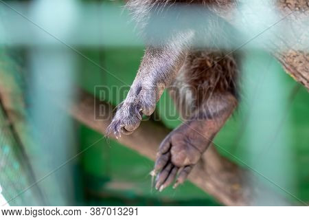 Paws Of An Animal Locked In A Cage Behind A Metal Fence And Wants To Go Home, Rescue Of Wild Animals