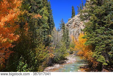 Conifers and Aspen trees by the Geneva creek landscape in Colorado during autumn time