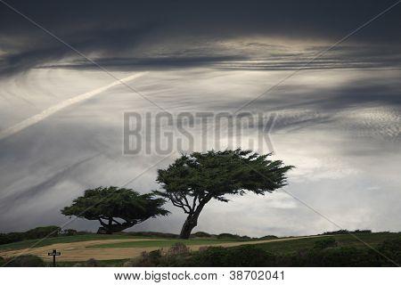 Windblown pine trees under moody sky