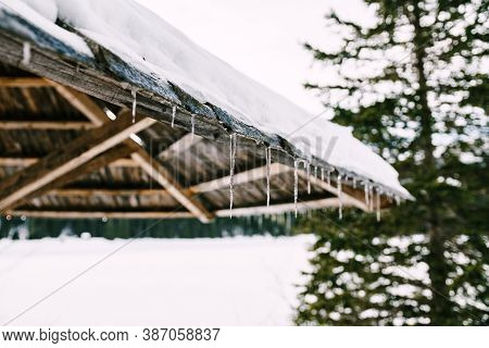 A Wooden Canopy With Icicles And Snow By A Tall Tree With A Shallow Depth Of Field.