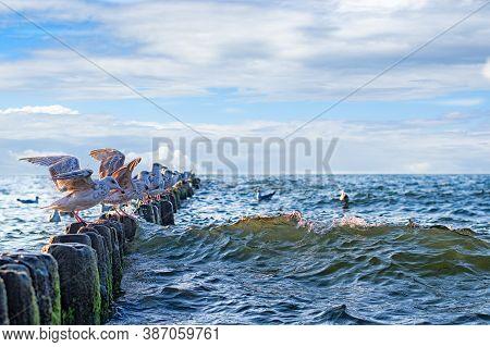 Landscape Polish Sea Of Breakwaters And Sand Dunes. Seagulls Portrait Against Sea Shore. Baltic Sea