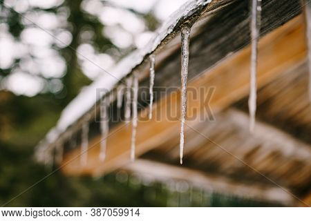 Close-up Of Icicles On A Wooden Canopy With Shallow Depth Of Field Of The Forest.