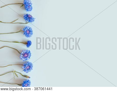 Flower Line Of Blue Cornflowers On A Pastel Blue Background. Top View, Copy Space. Empty Space For A