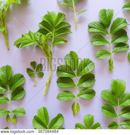 Top View Of Fresh Spring Greens On Pastel Purple Background. Floral Pattern, Flat Lay. Basis For Inv