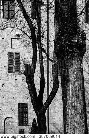 Whimsical Shade Of Trees In The Courtyard Of The Duke Of Gonzaga's Palace In Mantua In Black And Whi