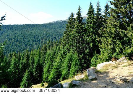 Strunga In Bucegi, Carpathian Mountains. Typical Landscape In The Forests Of Transylvania, Romania.