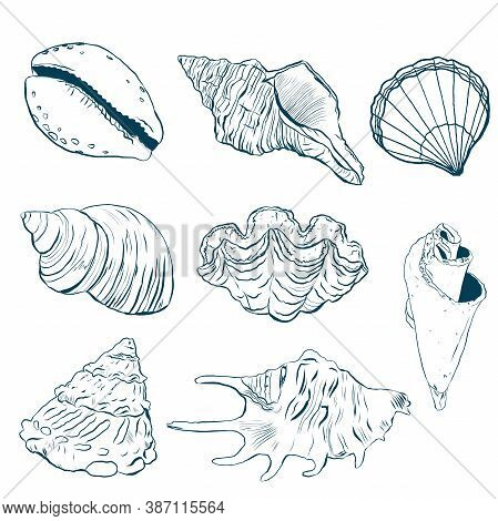 Watercolor Sea Shells Line Art Set. Hand Painted Underwater Element Illustration Isolated On White B