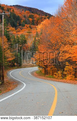 Colorful  Maple trees by curvy road in Quebec countryside during autumn time
