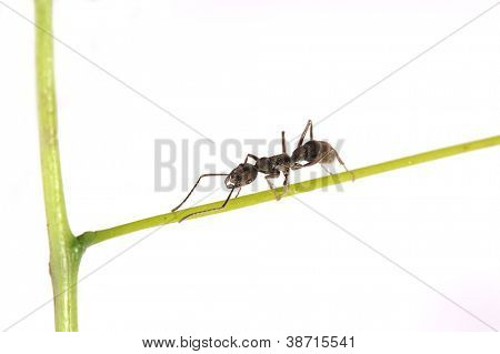 ant on a green grass