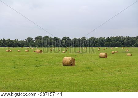 Agricultural Field With Harvested Hay For Farms.