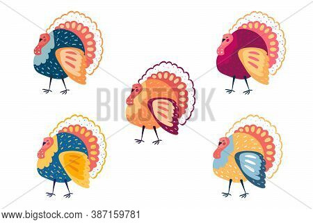 Funny Colorful Turkeys Clip Art. Thanksgiving Elements. Isolated On White Background. Domestic Anima