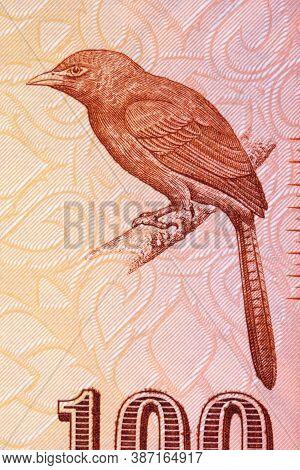 Orange-billed Babbler A Portrait From Sri Lankan Money