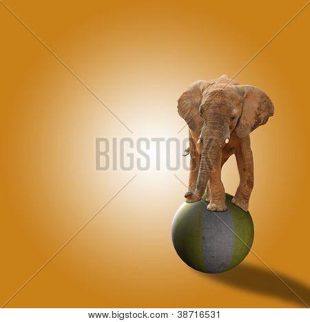 Elephant Standing On Ball On Orange Background