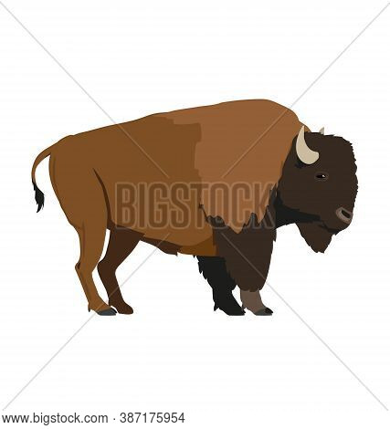 Bison Bison Bison - Plains Bison - Male - Side View - Flat Vector Isolated