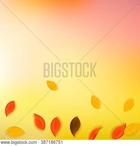 Falling Autumn Leaves. Red, Yellow, Green, Brown Neat Leaves Flying. Gradient Colorful Foliage On Po