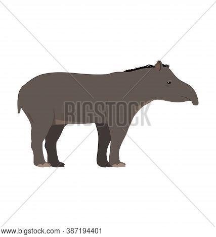 Tapirus Terrestris - South American Tapir - Side View - Flat Vector Isolated