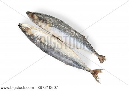 Frozen Mackerel Fish Isolated On White Background. Top View.