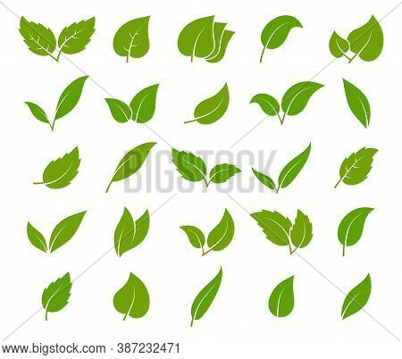 Leaves Green Icon Set. Different Elegance Shapes Young Trees Botanical Element, Herbal Tea Emblem, L