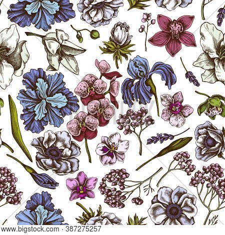 Seamless Pattern With Hand Drawn Colored Anemone, Lavender, Rosemary Everlasting, Phalaenopsis, Lily