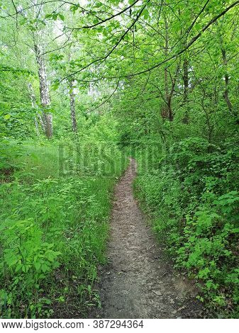 Footpath Through Park In Spring. Green Spring Forest With Path. Running Along Forest Path. Walkway I