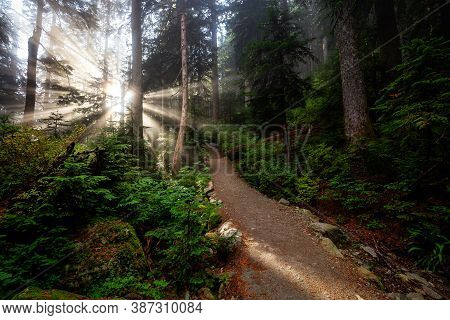 Dreamy View Of The Sunrays In A Rainforest During A Sunny And Foggy Day. Hiking Path Trail In The Wo