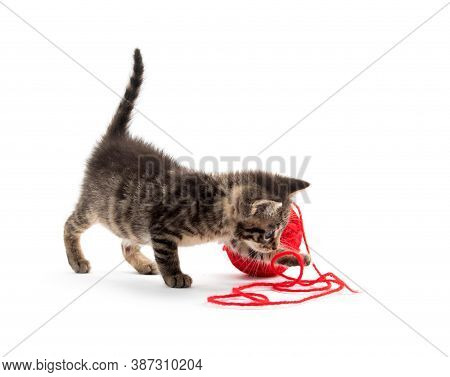 Cute Tabby Kitten Playing With Red Yarn