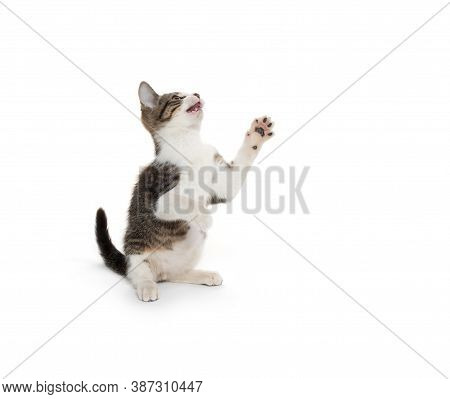 Cute Tabby Kitten On White Background