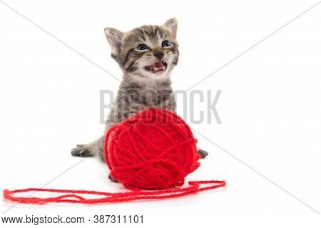 Cute Tabby Kitten With Red Ball Of Yarn Isolated On White Background