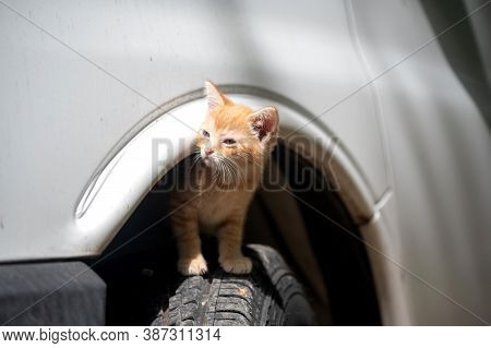 Cute Yellow Tabby Kitten Standing Dangerously On A Car Tire Of A Parked Vehicle. Pets Under Cars Run