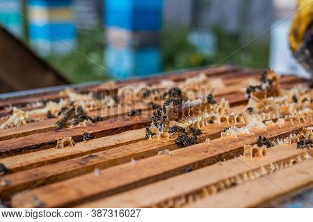 Close Up View Of The Opened Hive Body Showing The Frames Populated By Honey Bees. Honey Bees Crawl I
