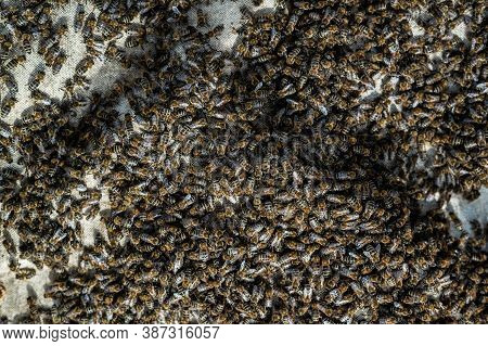 A Swarm Of Bees Crawling, Macro Shot. A Colony Of Bees Crawling On A White Background. Beekeeping, S